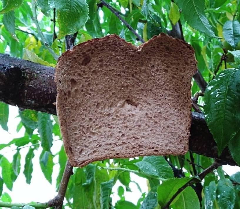 Bread Trees